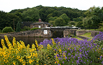 Floral Display - Calder & Hebble Canal